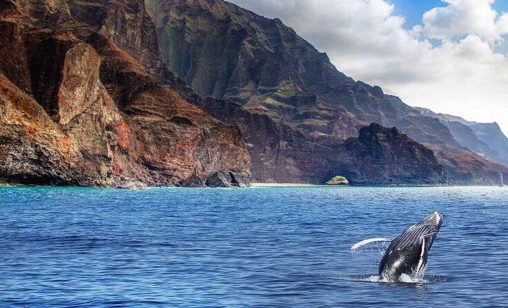 kalalauwhale