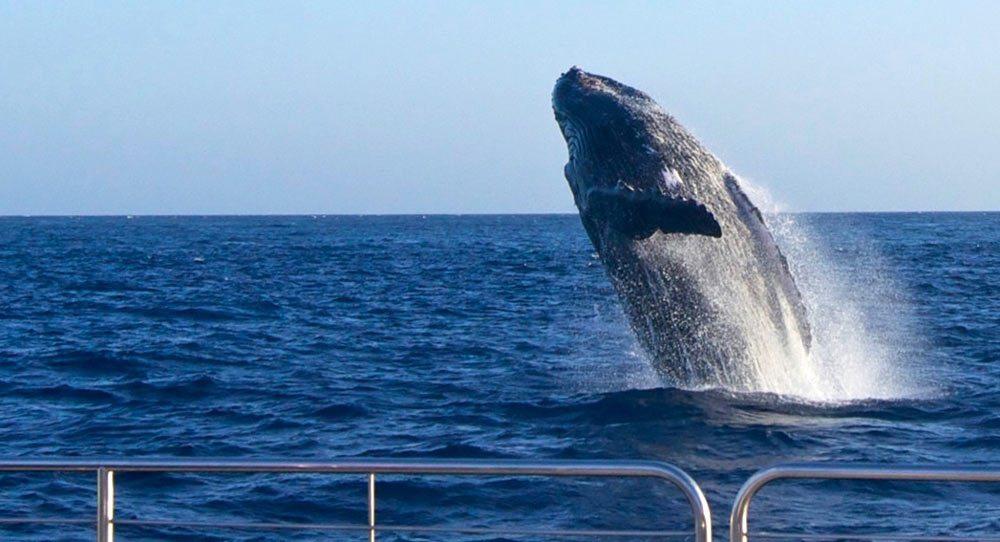 kauai-whale-watch