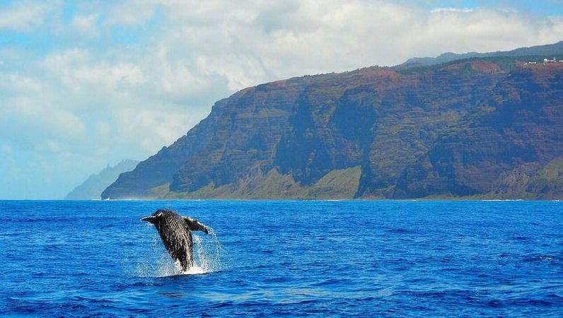 kauai-whale-watching