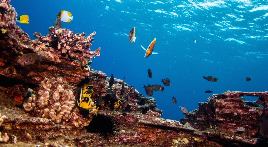 scuba-diving-kauai-fish