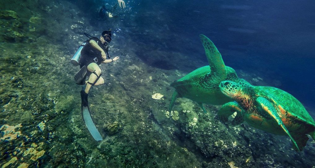 scuba-diving-kauai-honu-sea-turtle