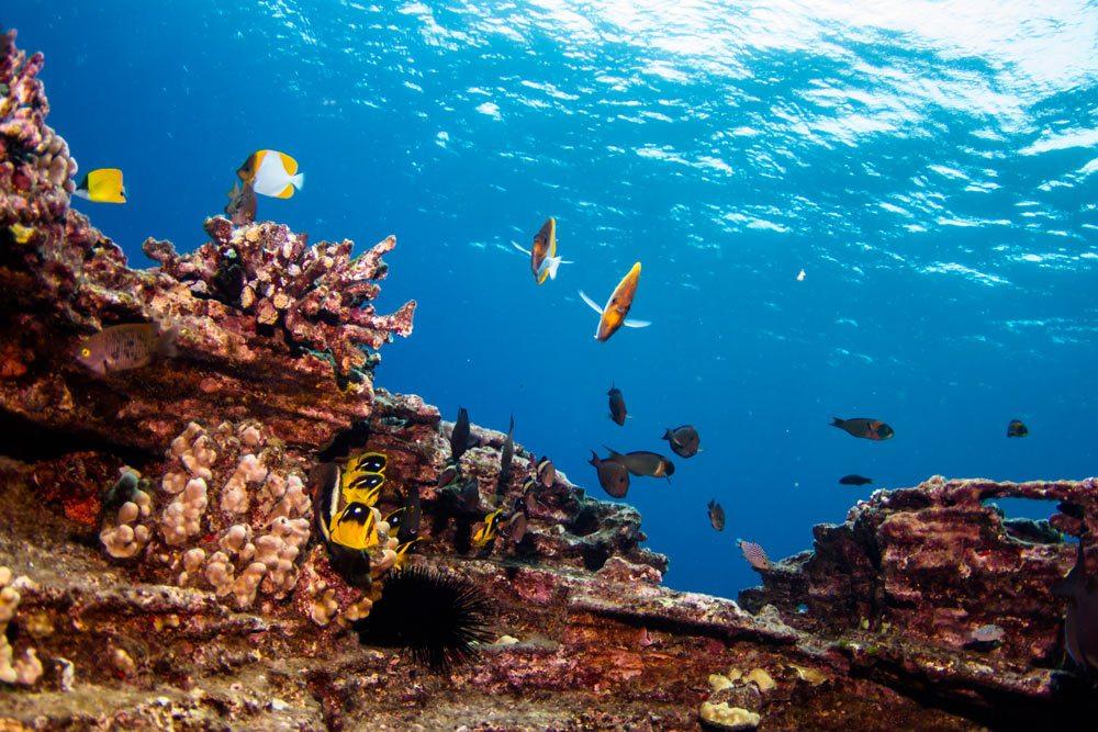 Niihau & NaPali Coast Snorkel - Blue Dolphin Charters